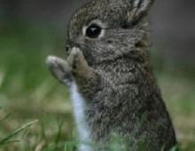 Lettera del coniglietto Pasquale